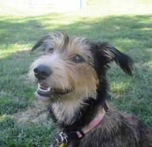 Adopt, Rescue, Dog, Puppy