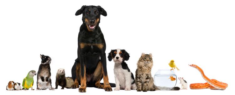 row-of-pets
